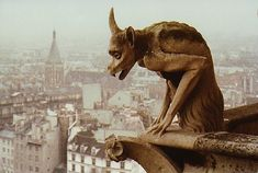 Notre Dame Cathedral - keeping watch