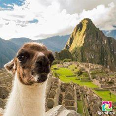"""""""The best Selfie in #MachuPicchu  El mejor Selfie en #MachuPicchu #Cusco @igersCusco . Si te gusta la foto, compártela tagueando a quienes más quieras.…"""""""