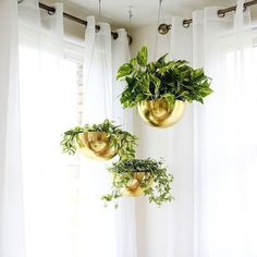 15 indoor plant display ideas that are borderline genius - Home Decoration Styling Best Indoor Plants, Cool Plants, Indoor Garden, Green Plants, Herb Garden, Vegetable Garden, House Plants Decor, Plant Decor, Window Plants