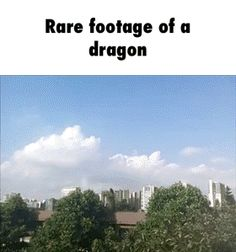 rare footage of a dragon