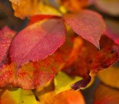 #Autumn #color