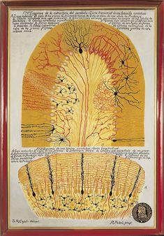 "Pedro Ramón y Cajal (drawing) & R. Padró (painting), ""Scheme of the structure of the cerebellum"" (c. 1900)"