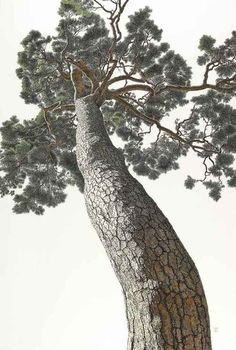 Choi Yeong-Geol (Korean, b. An Auspicious Pine Watercolour on Korean paper, x cm. Landscape Pencil Drawings, Landscape Art, Landscape Paintings, Watercolor Sketchbook, Watercolor Drawing, Plant Painting, Painting & Drawing, Pine Tree Art, Korean Painting