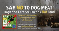 SAY NO TO DOG MEAT.NET PLEASE SIGN PLEASE SHARE PLEASE BE THE VOICE OF THE TORTURED VOICELESS ANIMALS OF THE WORLD! ADOPT FOSTER SPAY  NEUTER NO KILL!