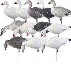 Tanglefree Pro Series Full Body Snow Goose Combo Pack | Goose Decoys