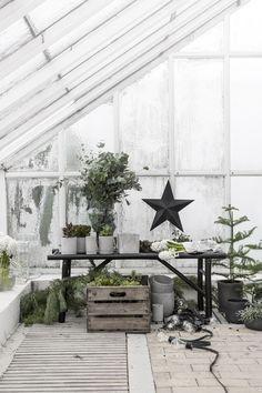 Green Christmas styling | black Christmas stars | fir trees
