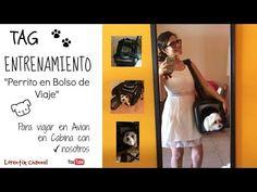 #TAG #Entrenamiento #Bolso de viaje para #perro #YouTube regalame un like por favor ycomparte este video!