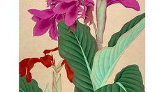화가의 아틀리에 Plants, Plant, Planets