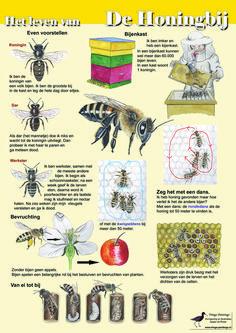 Educatieve kaart Het leven van de honingbij (dubbelzijdige kaart) #honingbij #imker #drachtplanten #honingraat #kwispeldans # rondedans Buzz Bee, Teaching Biology, Organic Living, Bee Happy, Save The Bees, Fruit Art, Fauna, Summer Crafts, Bee Keeping