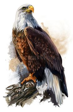 Bird Drawings, Animal Drawings, Drawing Birds, Beautiful Birds, Animals Beautiful, Aigle Animal, Eagle Images, Bald Eagle Pictures, Eagle Wallpaper