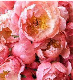 Blush Peonies, Peonies Bouquet, White Peonies, White Wedding Flowers, All Flowers, Amazing Flowers, Where To Buy Peonies, Peonies Delivery, Coral Charm Peony