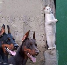 BE THE WALL - LOLcats is the best place to find and submit funny cat memes and other silly cat materials to share with the world. We find the funny cats that make you LOL so that you don't have to. Animal Jokes, Funny Animal Memes, Funny Animal Videos, Cute Funny Animals, Funny Animal Pictures, Cute Baby Animals, Funny Dogs, Animals And Pets, Cute Cats