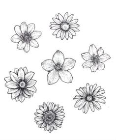25 Beautiful Flower Drawing Information & Ideas - Brighter Craft - 25 Beautiful . - 25 Beautiful Flower Drawing Information & Ideas – Brighter Craft – 25 Beautiful Flower Drawing - Easy Flower Drawings, Beautiful Flower Drawings, Pencil Drawings Of Flowers, Flower Sketches, Art Drawings Sketches, Beautiful Flowers, Drawing Flowers, Flower Design Drawing, Daisy Drawing