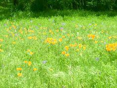 Chico spring #bidwellpark
