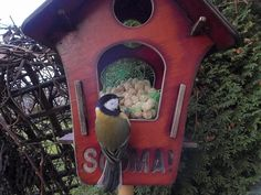 Linnukaamera: rasvatihane by Veeseire Bird Feeders, Outdoor Decor, Nature, Painting, Home Decor, Naturaleza, Decoration Home, Room Decor, Painting Art