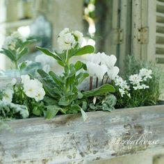 プランターボックスと白い花