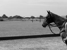 © Roxanne Legendre - Equestrian Photography   Brittany Polo Club, La Baule
