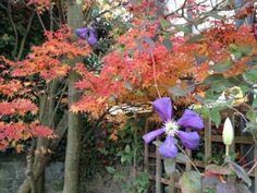 Greenmantle Gardens Ashburton Francoise Garden Design Images, Houzz, Devon, Gardens, Plants, Garden, Plant, Garden Types, Yards