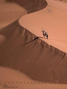 Traacks And Shadows In The Namib Dessert by Judylynn Malloch - Photo 173364263 / 500px