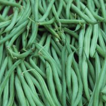 Organic Maxibel Bean ~ 2015's green bean choice :)