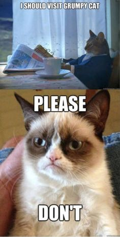 Grumpy Cat you make me laugh! Grumpy Cat Quotes, Funny Grumpy Cat Memes, Funny Animal Jokes, Cat Jokes, Cute Funny Animals, Funny Animal Pictures, Funny Cats, Funny Memes, Animal Memes
