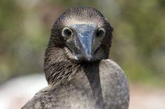 Galapagos Liveaboard - DiveDocMD's Photos