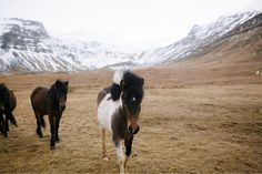 iceland by olivia rae james: http://readcereal.com/iceland