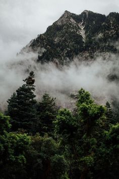 #nature #fog #trees #dark #cold #silence #green #mountains #landscapes