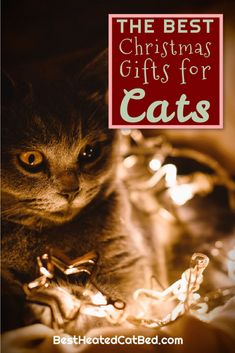 We have come up with a list of perfect presents that are certain to please! We are sure that you can find exactly what you are looking for on our list of Christmas gifts for kitties. Christmas Ties, Great Christmas Gifts, 1st Christmas, Ugly Christmas Sweater, Heated Outdoor Cat House, Heated Cat Bed, Heating Pads, Cute Stockings, Cat Sweaters