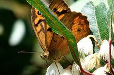 Moth nestled among the flowers