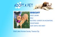 Adopt a Pet Tuesday: Biscuit, Abraham & Jewel - Northern Michigan's News Leader