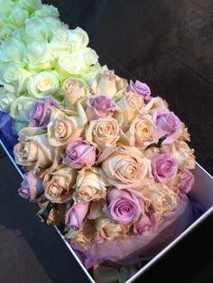 Wrap Pure - Roses Antiques De Vida Vida OGF7N