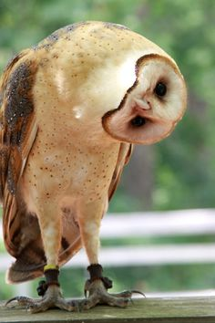 """""""Owls have fourteen vertebrae bones in their necks, which is twice as many as humans. This gives their neck greater flexibility, so they can turn their head around to 270 degrees."""""""
