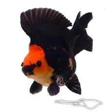 I'm a Goldfish really Goldfish, Aquarium, Pets, Animals, Goldfish Bowl, Aquarius, Animaux, Animal, Animales