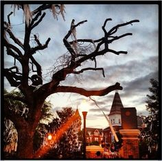 TOOMER'S CORNER- No other tradition like it!