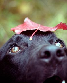 Lab & fall... What could be better?