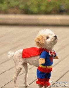 schattig hondje!!!!!!!! #lovethisdoc