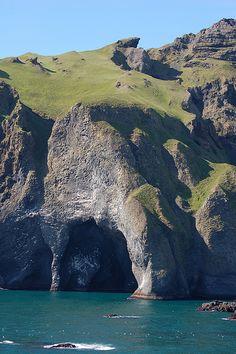 Vestmannaeyjar, Iceland-ralphunden