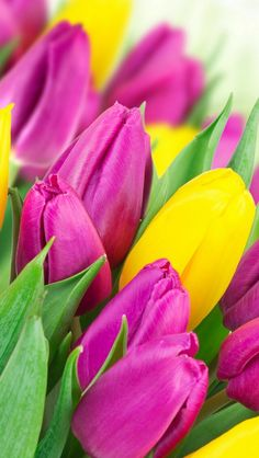 Wallpaper Iphone Spring Yellow Ideas For 2019 Trendy Wallpaper, Flower Wallpaper, Wallpaper Backgrounds, Yellow Tulips, Tulips Flowers, Wonderful Flowers, Beautiful Flowers, Qhd Wallpaper, Tulips Garden
