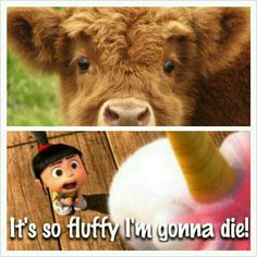 I want a fluffy cow when I get older