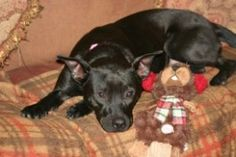 Lulu is an adoptable Patterdale Terrier (Fell Terrier) Dog in Grant, AL. Who isn't smitten with Curious George? No matter your age, the inquisitive little fellow who always seems to get into one scrap...