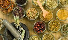As melhores plantas medicinais para combater doenças de inverno