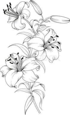 Pencil Art Drawings, Art Drawings Sketches, Tattoo Sketches, Tattoo Drawings, Pencil Drawings Of Flowers, Lilies Drawing, Drawing Flowers, Lilly Flower Drawing, Flower Design Drawing