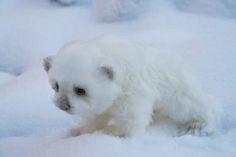 Polar white bear. By Tsybina Natali - Bear Pile