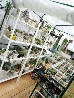 yucoさんが投稿した画像です。他のyucoさんの画像も見てませんか?|おすすめの観葉植物や花の名前、ガーデニング雑貨が見つかる!GreenSnap(グリーンスナップ)