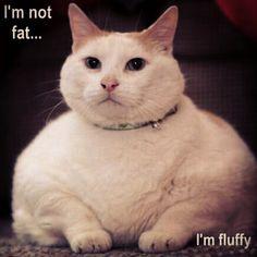 fat kitty hehe