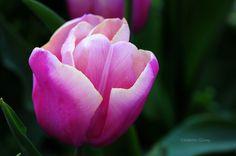 Purple by Celalettin Güneş on 500px