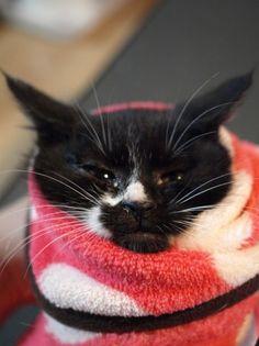 子猫わんさか。 | ツキネコカフェ