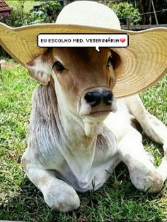 Foto Cowgirl, Veterinary Medicine, Memes, Country, Dogs, Disney, Tame Animals, Baby Pets, Pets