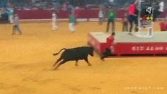 funny-gifs-of-the-day-12-pics-3